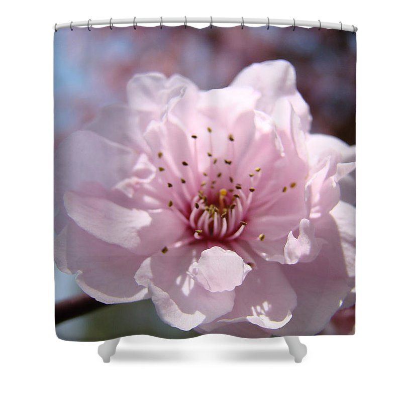�blossoms Artwork� Shower Curtain featuring the photograph Pink Blossom Nature Art Prints 34 Tree Blossoms Spring Nature Art by Baslee Troutman