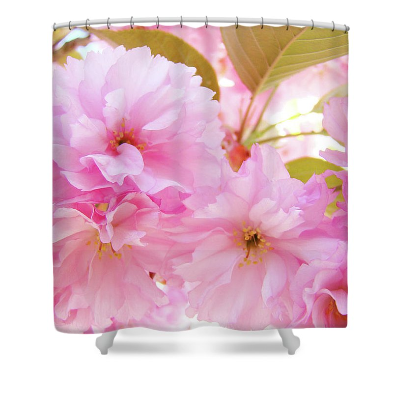 Blossom Shower Curtain featuring the photograph Pink Blossoms Art Prints Canvas Spring Tree Blossoms Baslee Troutman by Baslee Troutman
