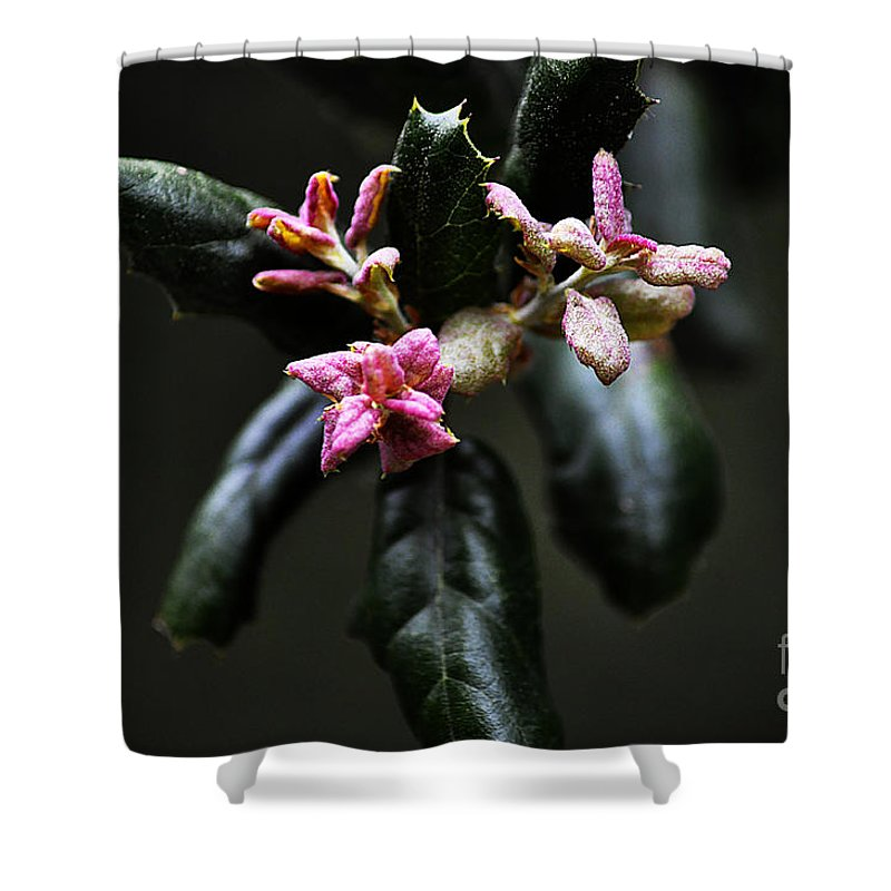 Clay Shower Curtain featuring the photograph Pink Bud by Clayton Bruster