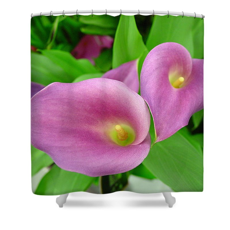 Floral Shower Curtain featuring the digital art Pink Callas by Sharon Alta Cathers