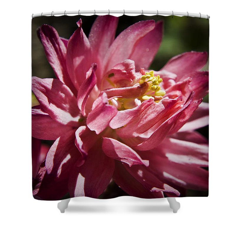 Columbine Shower Curtain featuring the photograph Pink Columbine by Teresa Mucha