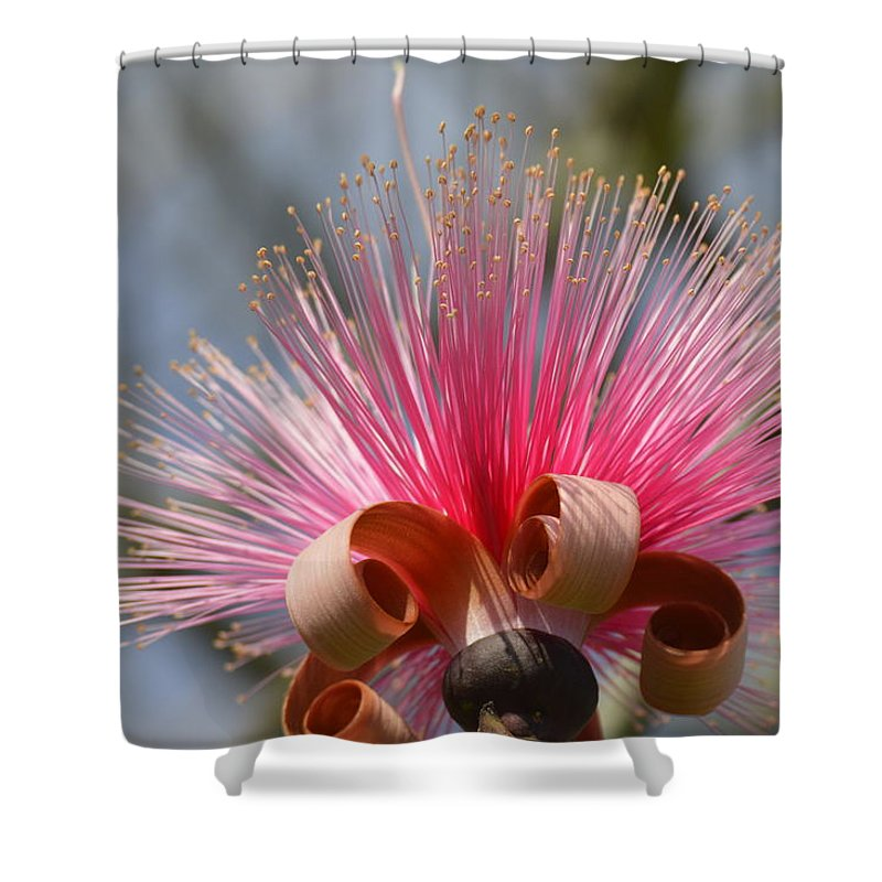 Shower Curtain featuring the photograph Pink Crown by Lenin Caraballo