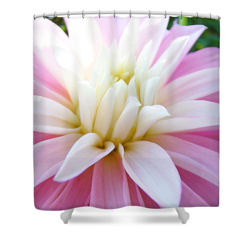 Dahlia Shower Curtain featuring the photograph Pink Dahlias Art Dahlia Flowers Giclee Prints Baslee Troutman by Baslee Troutman