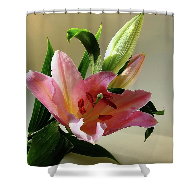 Daylily Shower Curtain featuring the photograph Pink Daylily by Jeff Townsend