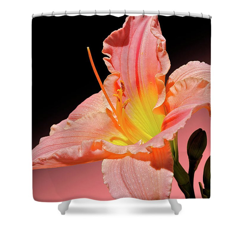 Daylily Shower Curtain featuring the photograph Pink Daylily by Phyllis Denton