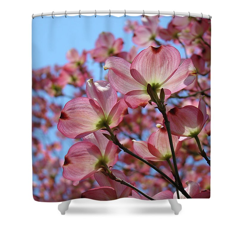 Dogwood Shower Curtain featuring the photograph Pink Dogwood Flowers Landscape 11 Blue Sky Botanical Artwork Baslee Troutman by Baslee Troutman