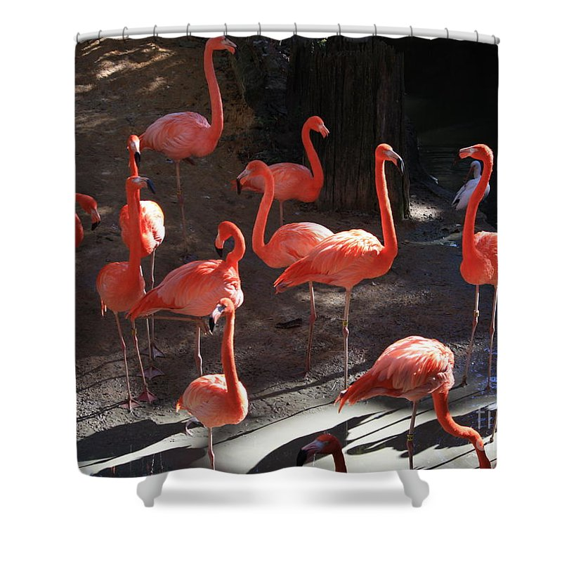 Pink Flamingos Shower Curtain featuring the greeting card Pink Flamingos by Carol Groenen