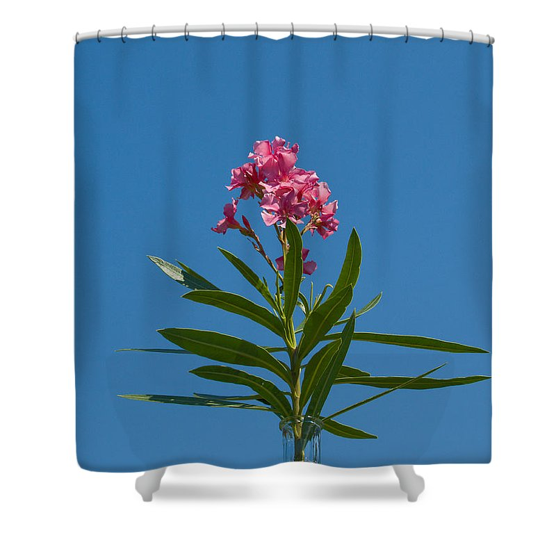 Florida; Indian; River; Melbourne; Nerium; Oleander; Red; Pink; Flower; Bush; Shrub; Poison; Poisono Shower Curtain featuring the photograph Pink Florida Oleander Blossom by Allan Hughes