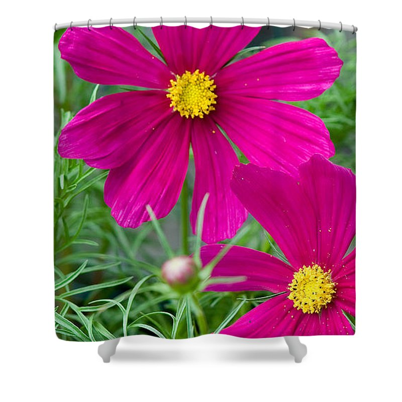 Pink Shower Curtain featuring the photograph Pink Flower by Michael Bessler