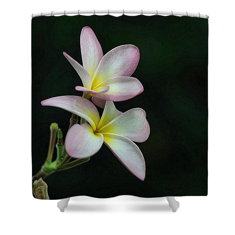 Flower Shower Curtain featuring the photograph Pink Flower by Tabitha Prichard