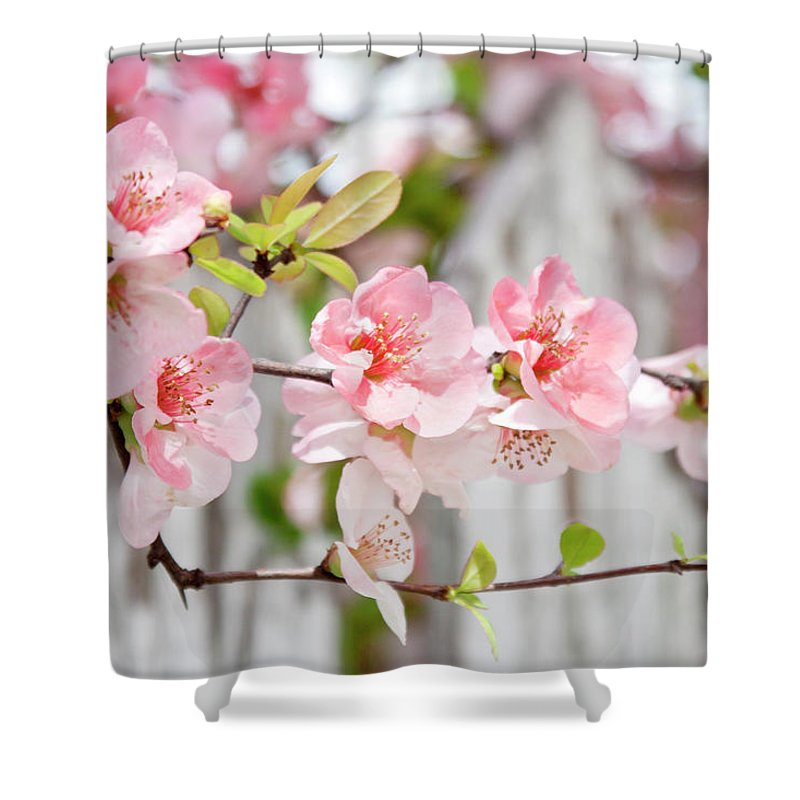 Flowers Shower Curtain featuring the photograph Pink Flowers And A White Picket Fence by Toni Hopper