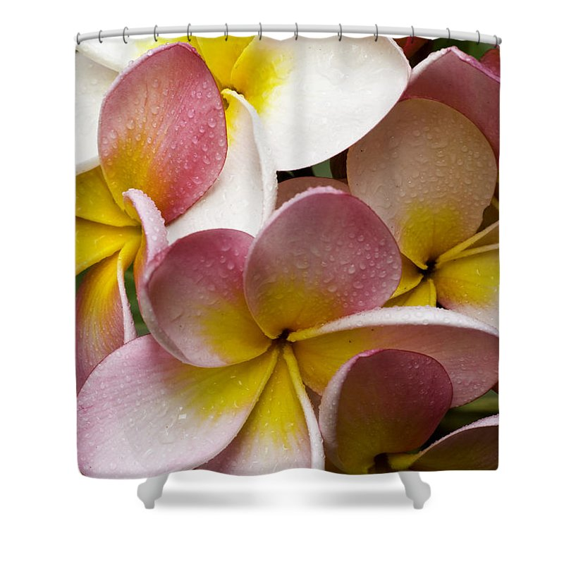 Pink Frangipani Shower Curtain featuring the photograph Pink Frangipani by Sheila Smart Fine Art Photography