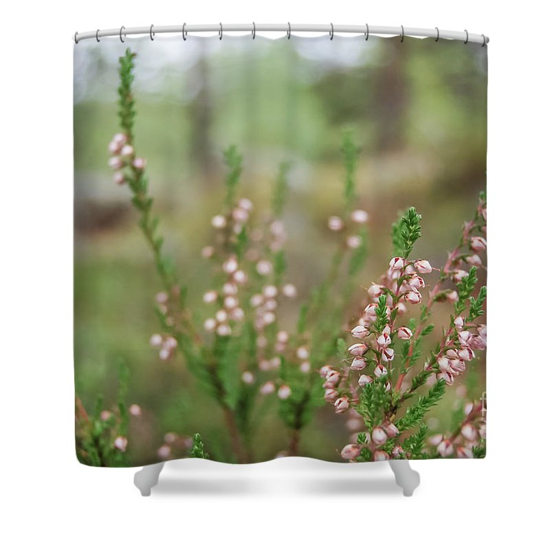 Pink Shower Curtain featuring the photograph Pink Heather, Calluna Vulgaris, In Foggy Forest by Ilari