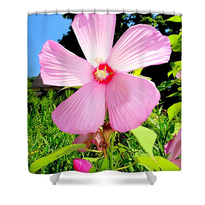 Nature Shower Curtain featuring the photograph Pink Hibiscus by Ed Weidman