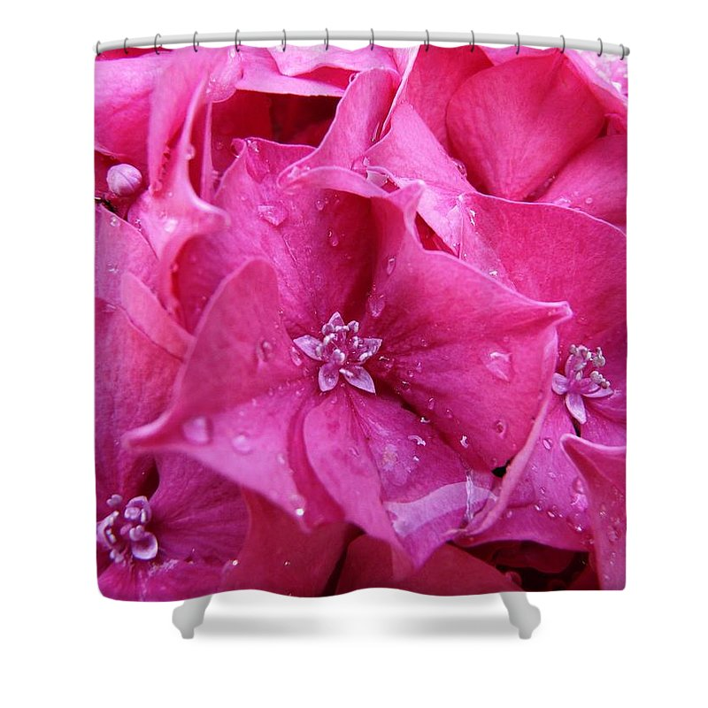 Flower Shower Curtain featuring the photograph Pink Hydrangea After Rain by Valerie Ornstein