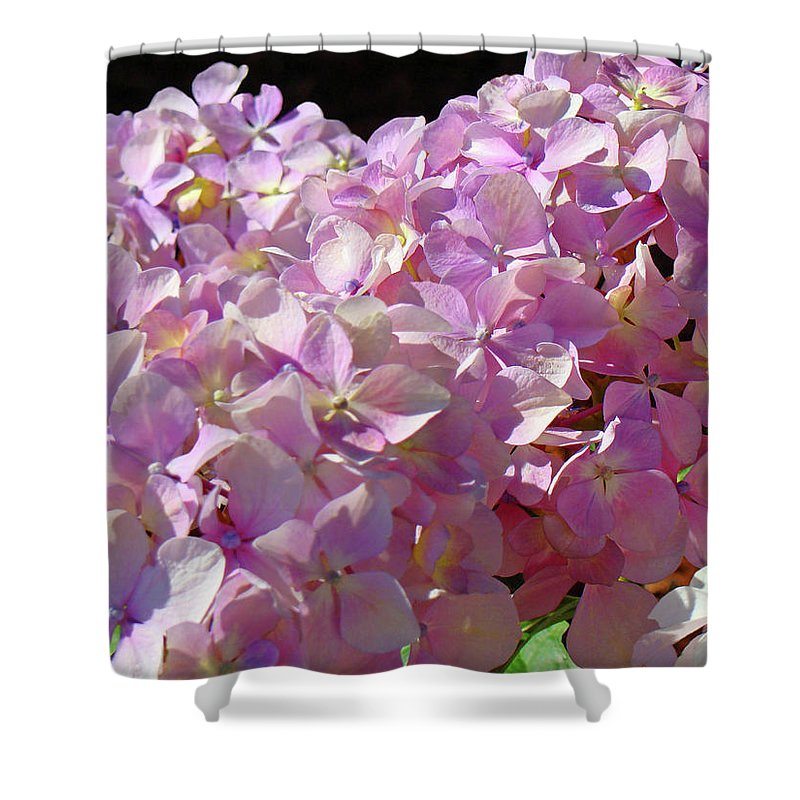 Nature Shower Curtain featuring the photograph Pink Hydrangea Flower Floral Art Prints Baslee Troutman by Baslee Troutman