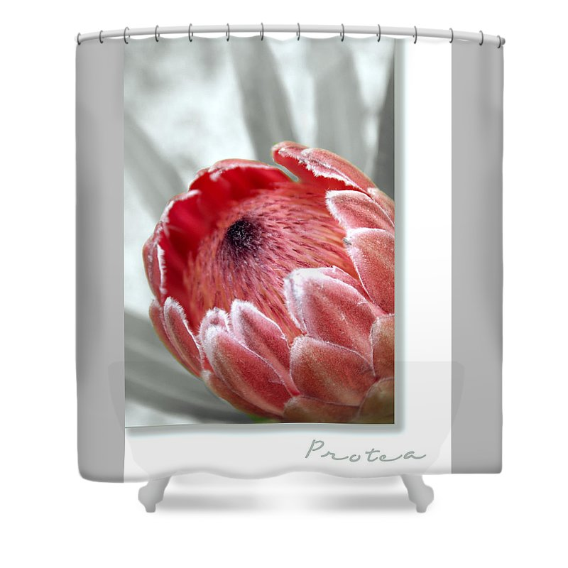 Nature Shower Curtain featuring the photograph Pink Ice Protea by Holly Kempe