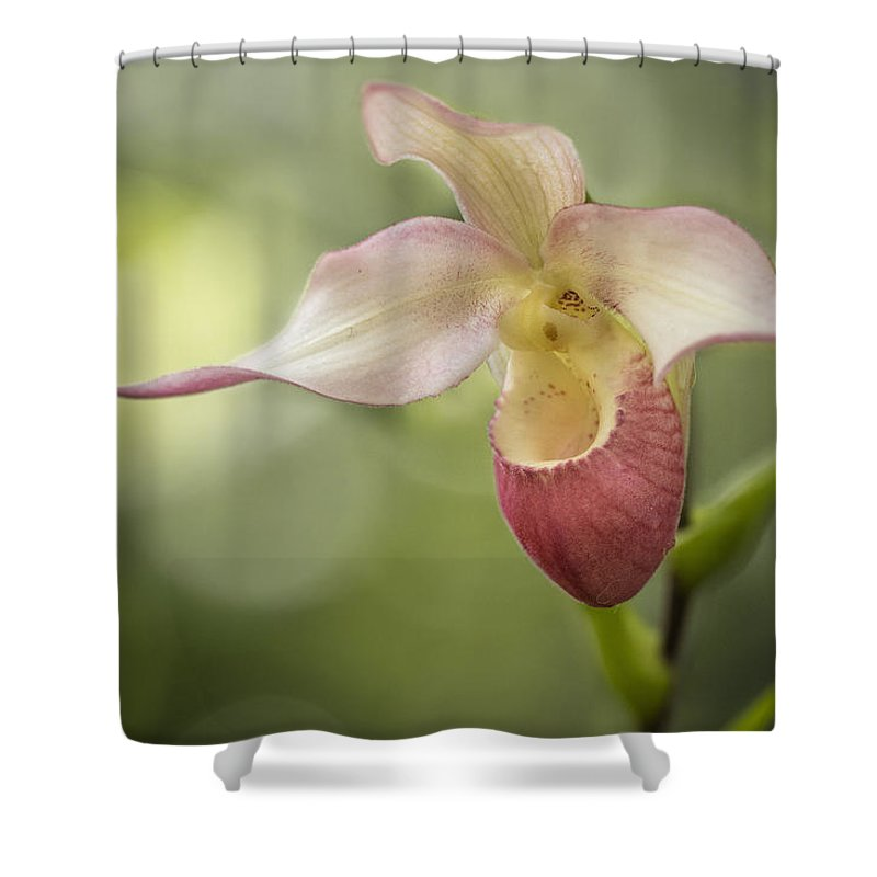 Shower Curtain featuring the photograph Pink Lady Slipper by Linda D Lester