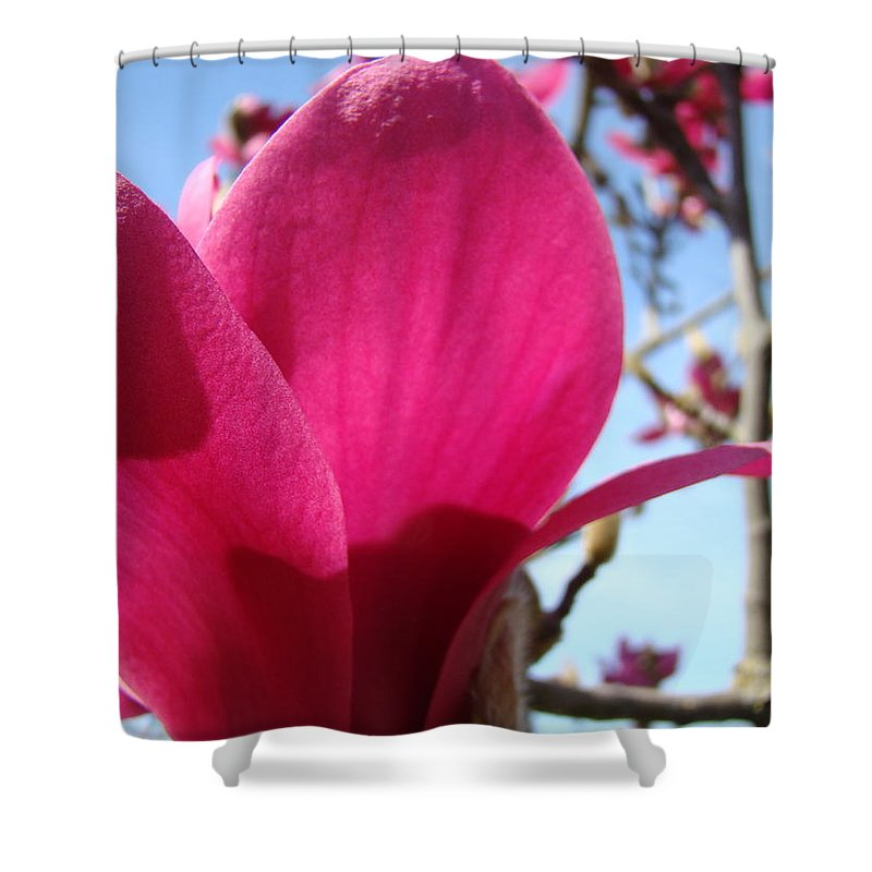 Magnolia Shower Curtain featuring the photograph Pink Magnolia Flowers Magnolia Tree Spring Art by Baslee Troutman