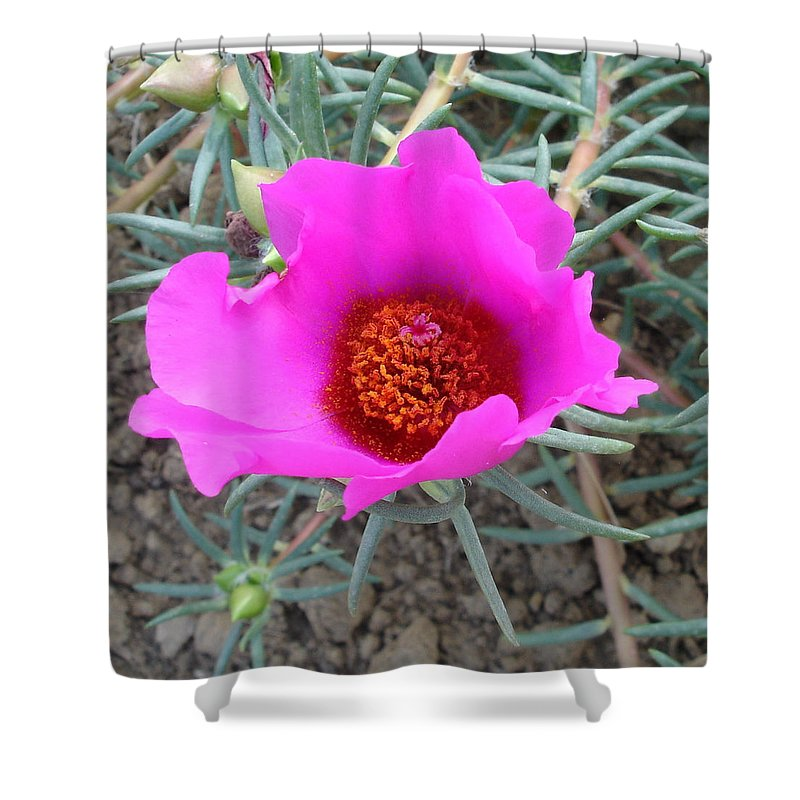 Flower Shower Curtain featuring the photograph Pink or wot by Susan Baker