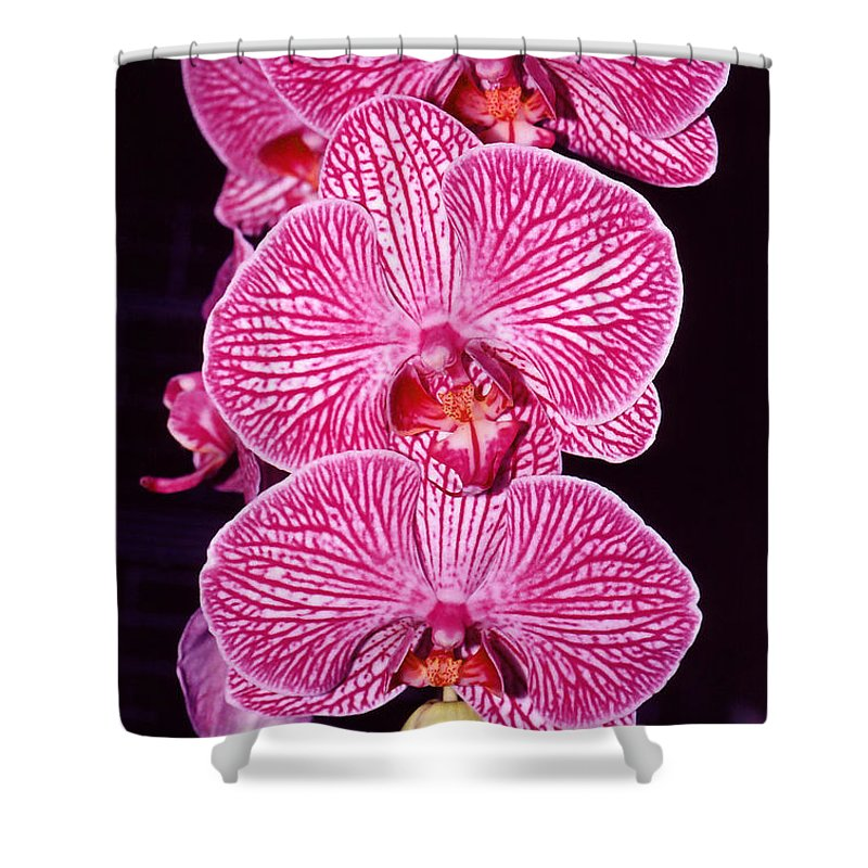 Photography Shower Curtain featuring the photograph Pink Orchids by Susanne Van Hulst