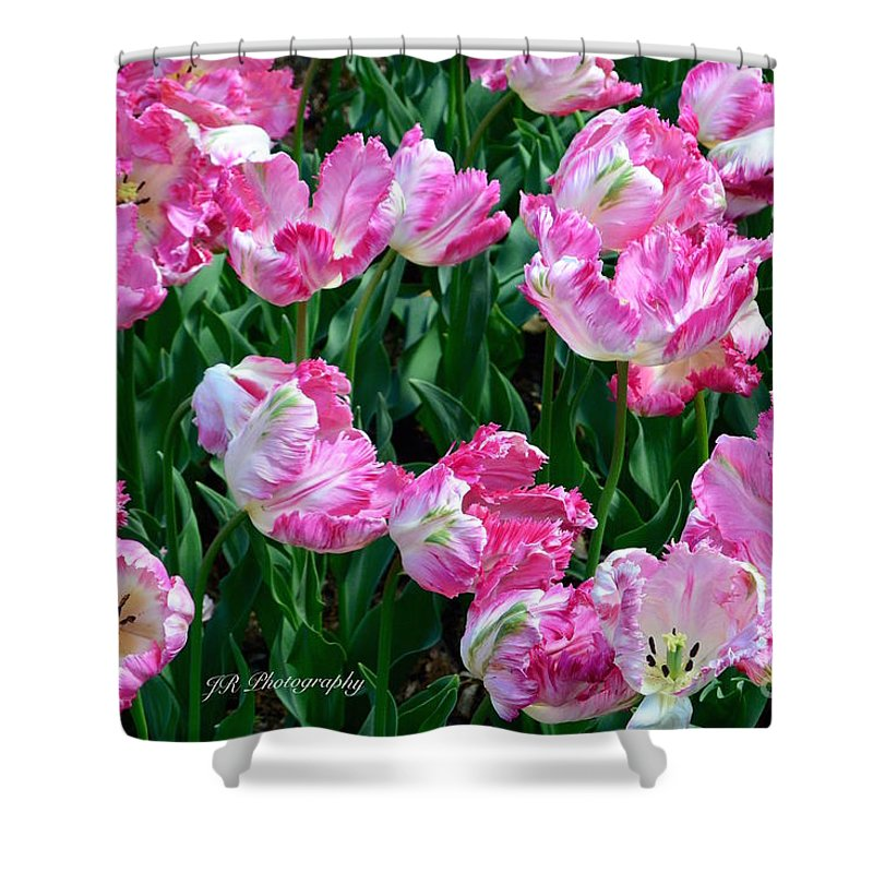 Anniversaries Shower Curtain featuring the photograph Pink Parrot Tulip Garden by Jeannie Rhode