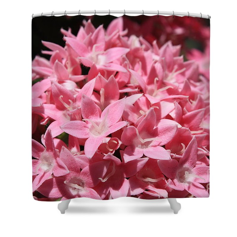 Pink Pentas Shower Curtain featuring the photograph Pink Pentas Beauties by Carol Groenen