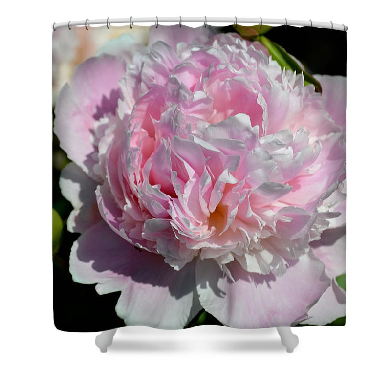 Flower Shower Curtain featuring the photograph Pink Peony by Belinda Stucki