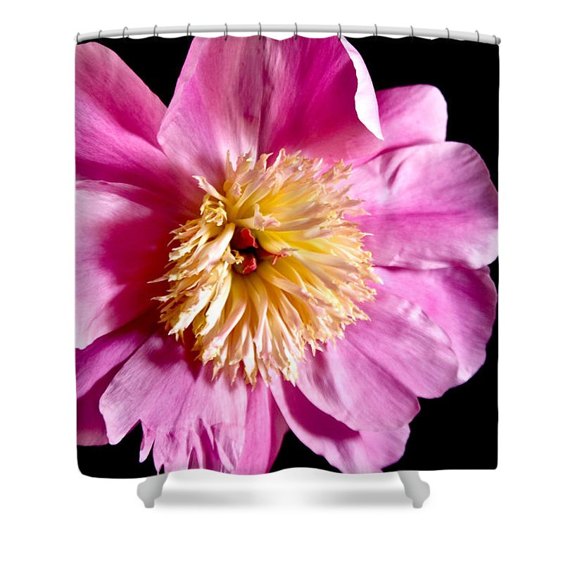 Flowers Shower Curtain featuring the photograph Pink Petals by Robin Lynne Schwind