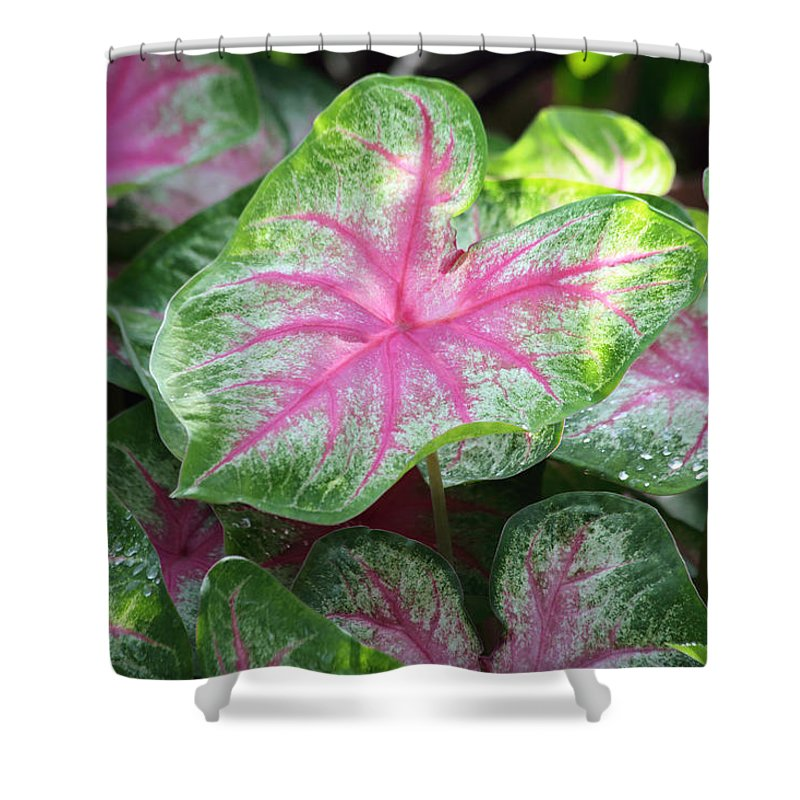 Dew Shower Curtain featuring the photograph Pink Plants by Inho Kang