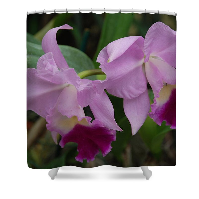 Macro Shower Curtain featuring the photograph Pink Purple Orchids by Rob Hans