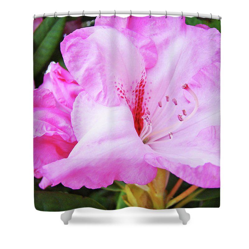 Rhodie Shower Curtain featuring the photograph Pink Rhododendron Art Print Floral Canvas Rhodies Baslee Troutman by Baslee Troutman
