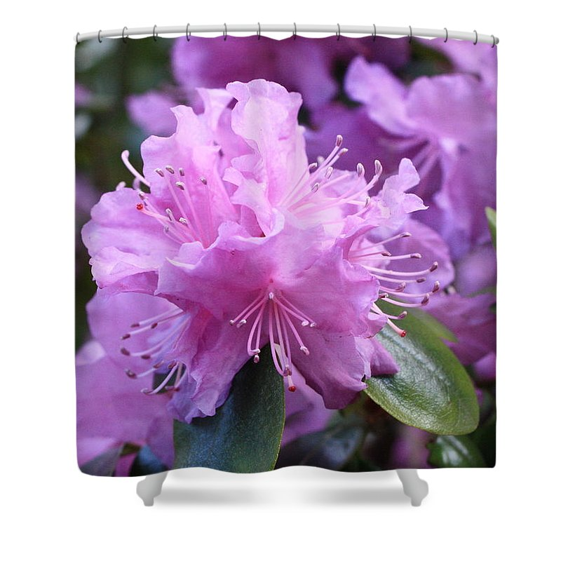 Flower Shower Curtain featuring the photograph Light Purple Rhododendron With Leaves by Carol Groenen