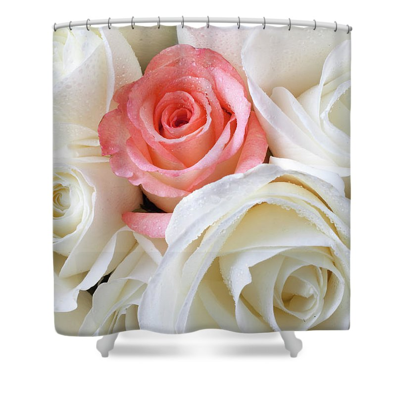 Pink Rose White Roses Shower Curtain featuring the photograph Pink Rose Among White Roses by Garry Gay