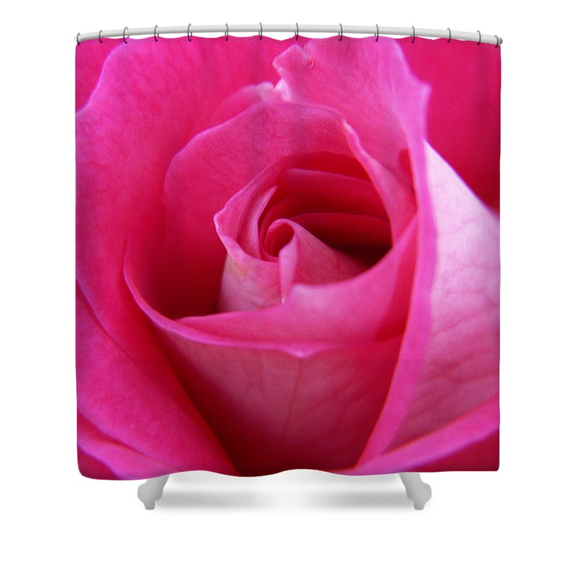 Rose Shower Curtain featuring the photograph Pink Rose by Amy Fose