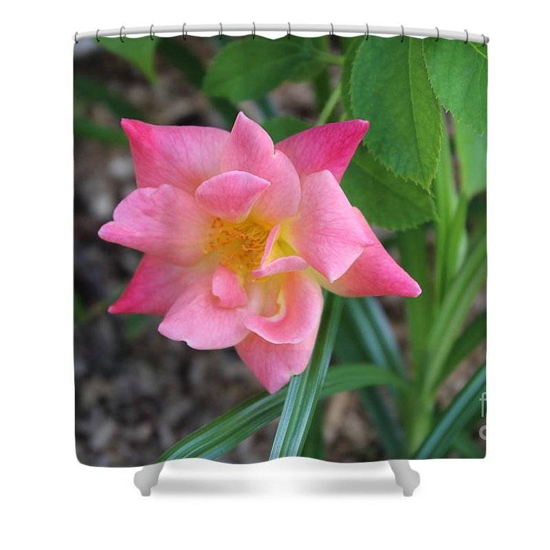 Pink Shower Curtain featuring the photograph Pink Rose by Haniet Cordovi