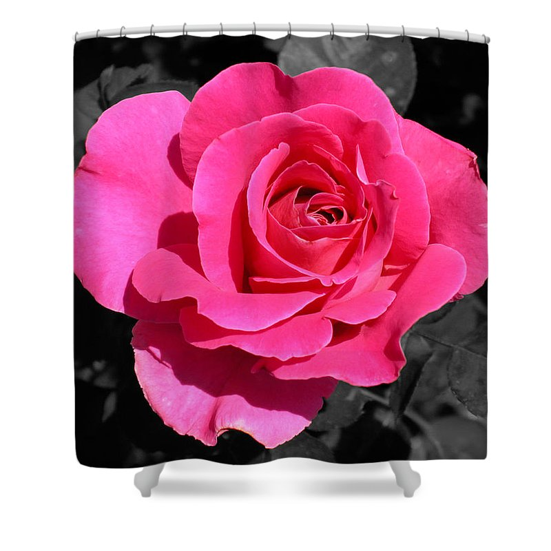 Pink Shower Curtain featuring the photograph Perfect Pink Rose by Michael Bessler