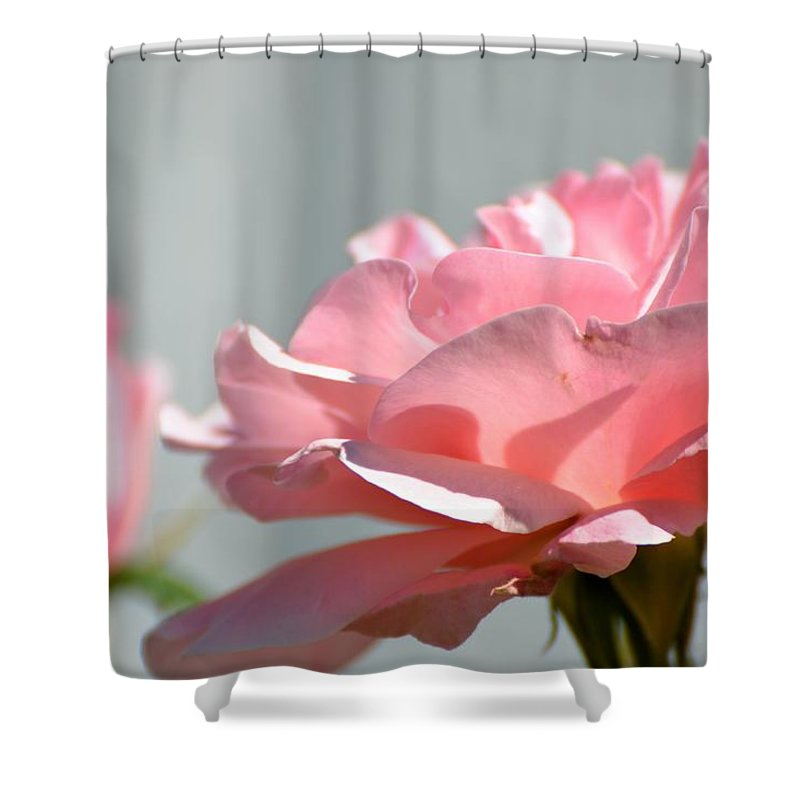 Pink Shower Curtain featuring the photograph Pink Rose by Robin White