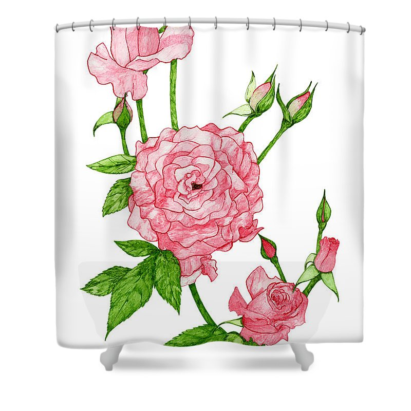 Roses Shower Curtain Featuring The Drawing Pink By Erica Tolbert