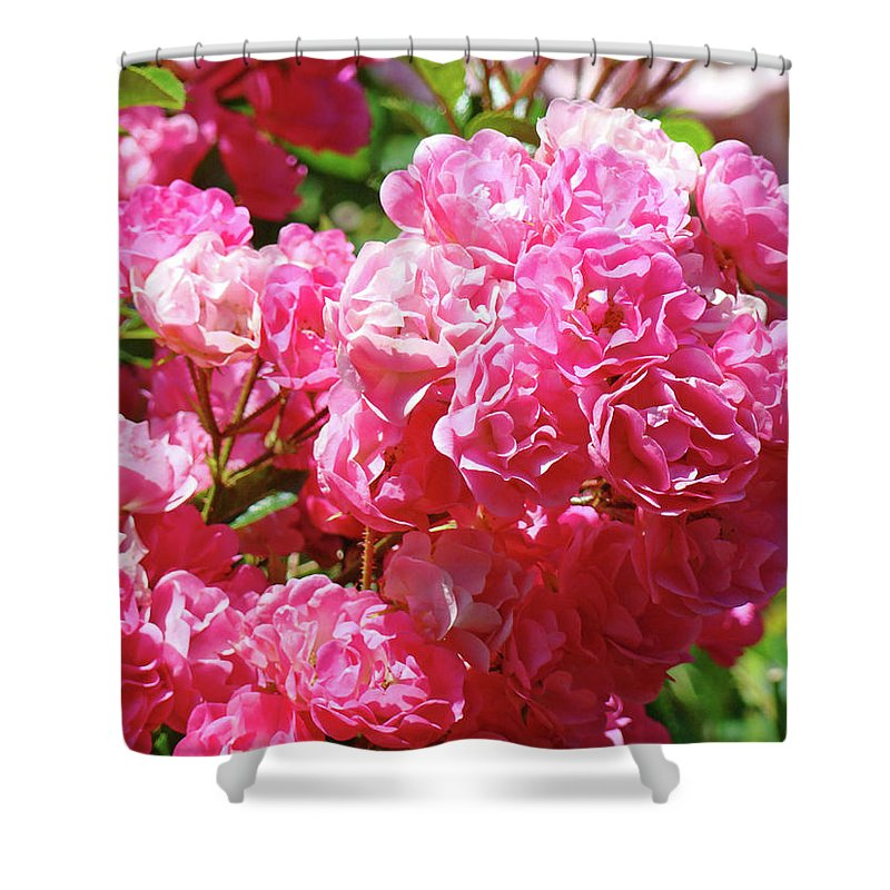 Rose Shower Curtain featuring the photograph Pink Roses Summer Rose Garden Roses Giclee Art Prints Baslee Troutman by Baslee Troutman