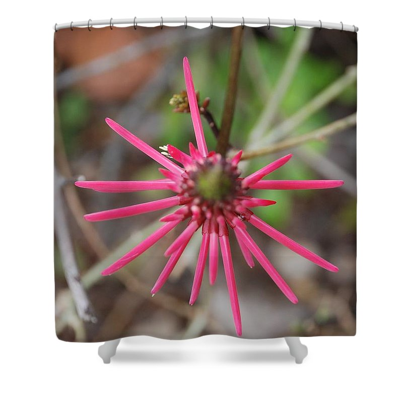 Flower Shower Curtain featuring the photograph Pink Spikes by Rob Hans