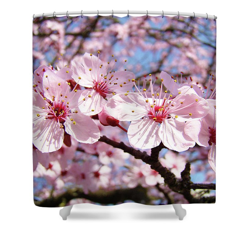 Nature Shower Curtain featuring the photograph Pink Spring Blossoms Art Print Blue Sky Landscape Baslee Troutman by Baslee Troutman