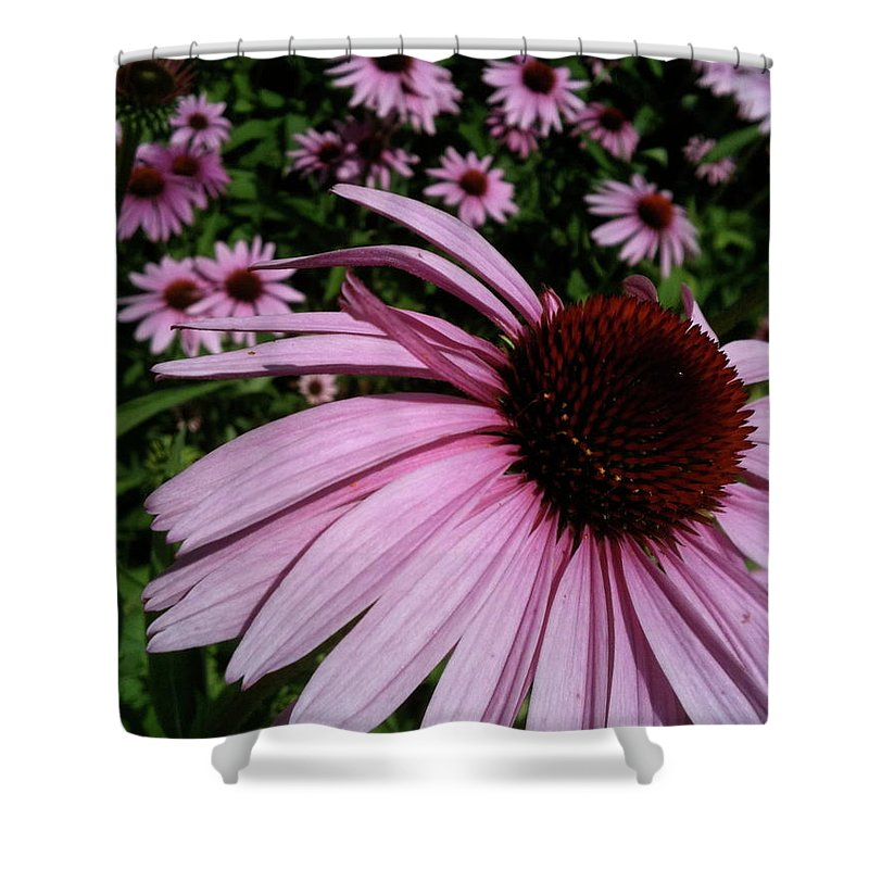 Shower Curtain featuring the photograph Pink Sweetie by Trish Hale