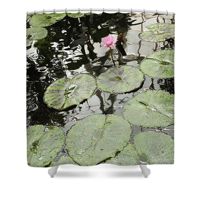 Ond Shower Curtain featuring the photograph Pink Water Lily by Carol Groenen