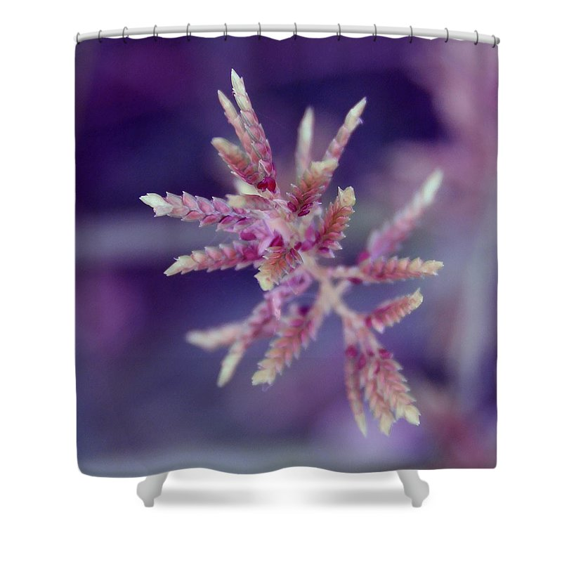 Nature Shower Curtain featuring the photograph Pink Weed by Linda Sannuti