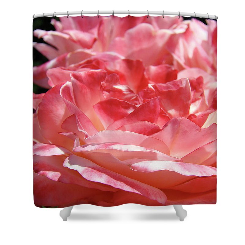 Rose Shower Curtain featuring the photograph Pink White Roses Floral Art Prints Rose Baslee Troutman by Baslee Troutman
