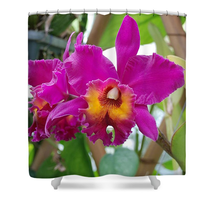 Macro Shower Curtain featuring the photograph Pinkishyellow Orchid by Rob Hans