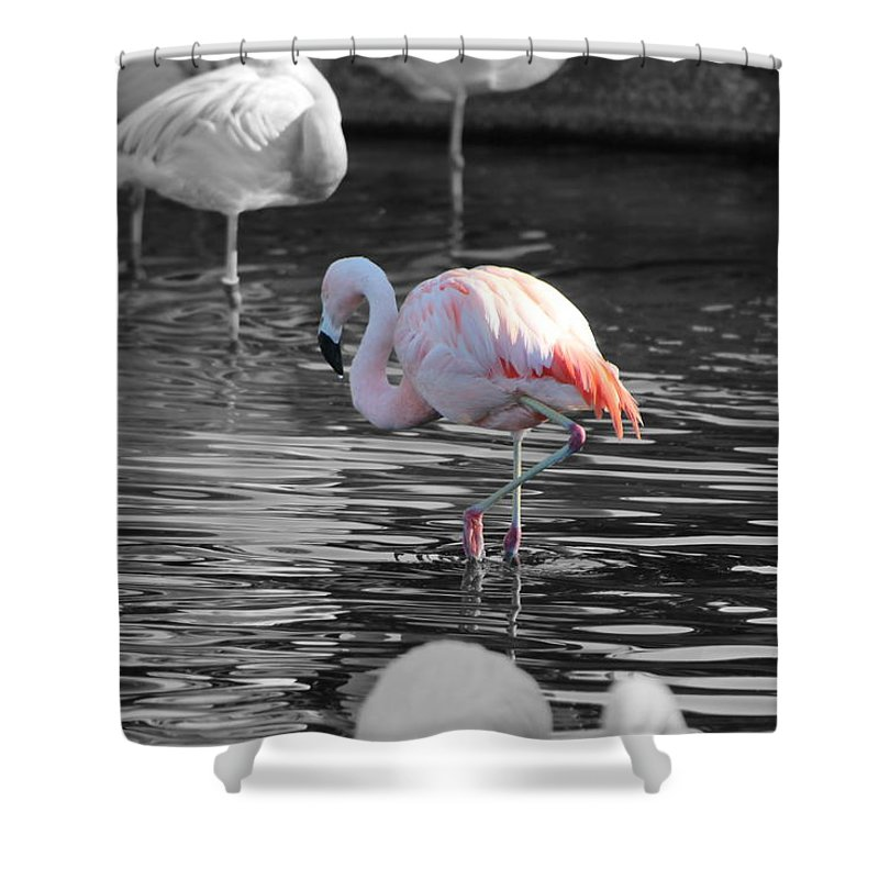 Palm Desert California Shower Curtain featuring the photograph Pinky by Colleen Cornelius