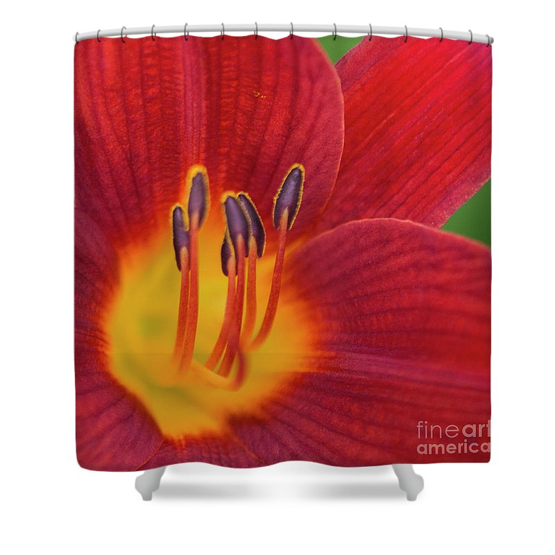 Pistil Shower Curtain featuring the photograph Pistil, The Female Reproductive Part Of A Flower by David Zanzinger