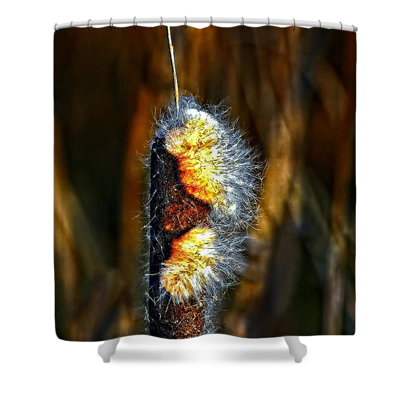 Cattail Shower Curtain featuring the photograph Pizzazz by Steve Harrington